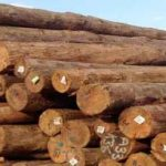 Government Dragged to Court Over Issuance of 'Special Permits' as Timber Rights