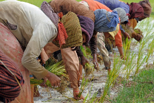 Afadjato Women Rice Farmers Commended For Resilience